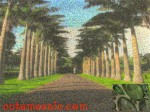 Palm tree way mosaic